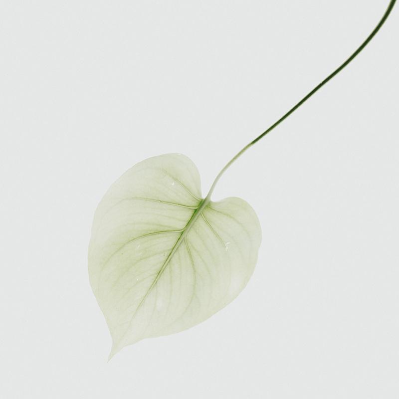 växter i karantän